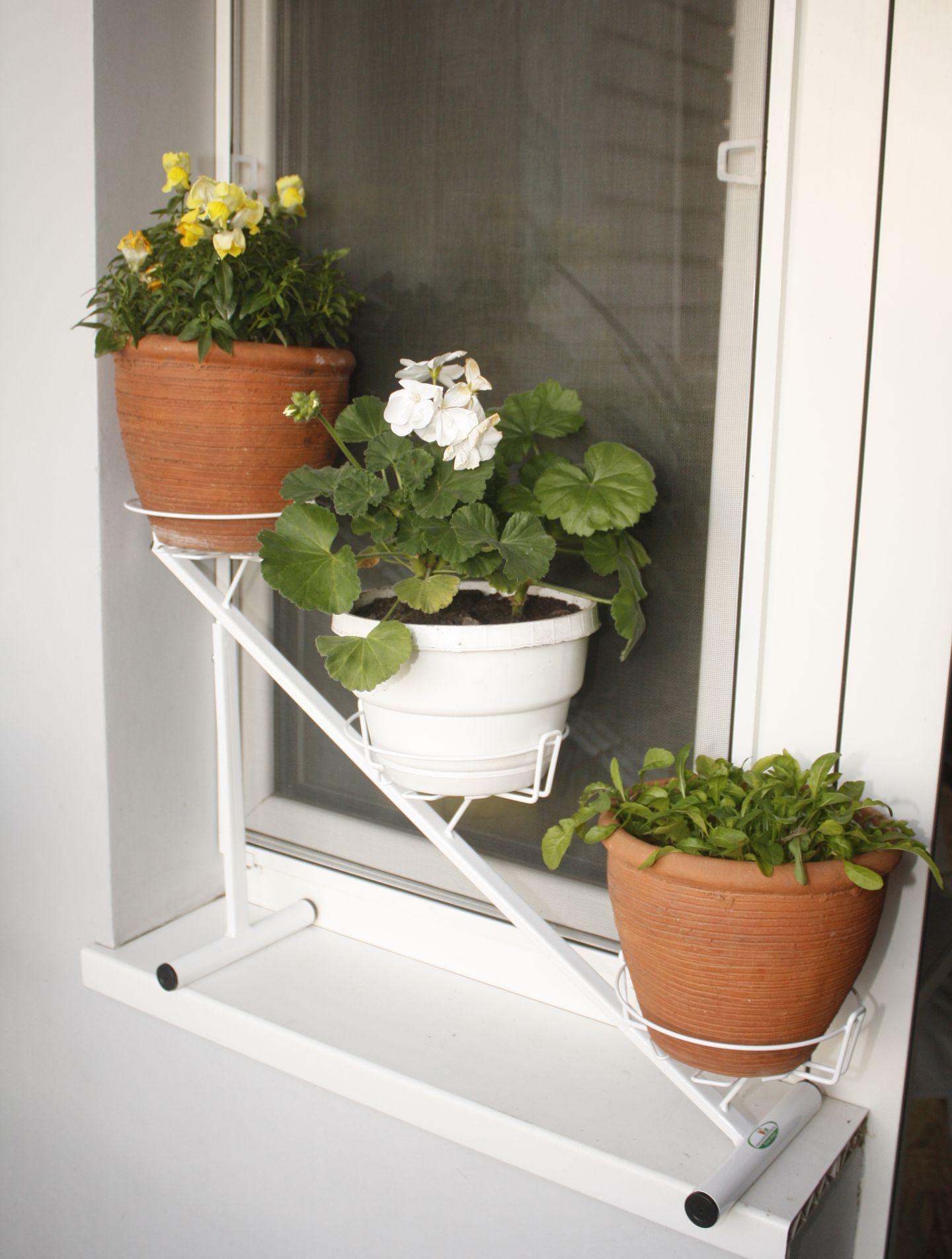 Подставки для цветов на подоконник Условия для выращивания цветов на окне 49